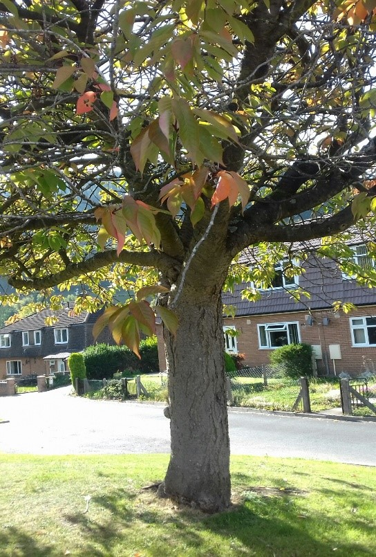 A street tree